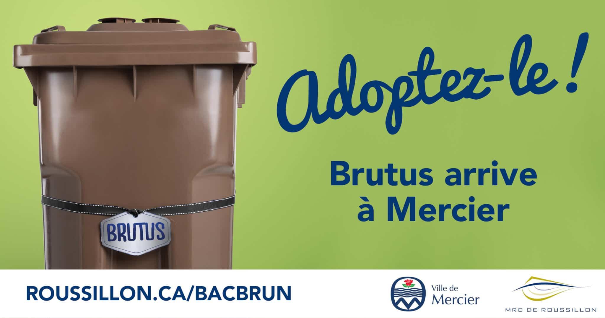 Bacs bruns: Brutus arrive en ville!